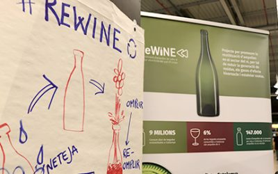 Reusing bottles could reduce Catalonia's wine-making sector's carbon footprint by up to 28%