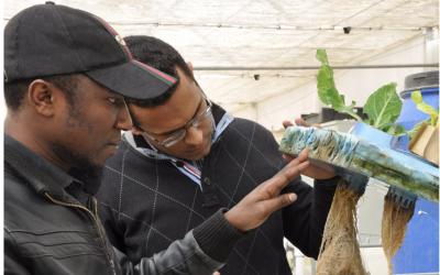 IDEA League Water, Energy, Food and Environment Nexus Winter School – Apply now!